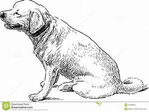 Big Sitting Dog Stock Photo - Image: 32483620