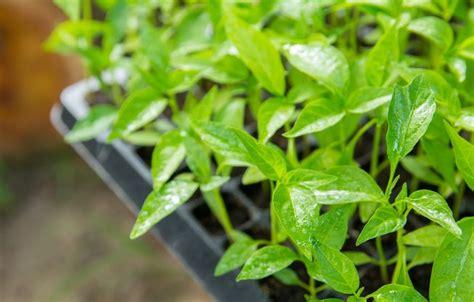 plant companies worth checking  mnn