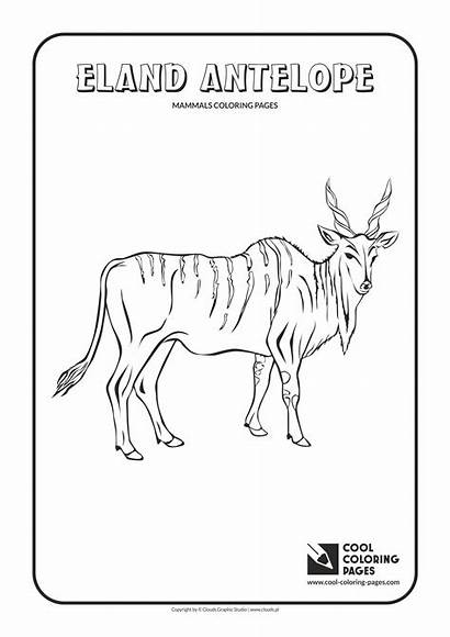Coloring Pages Cool Eland Animals Mammals Antelope
