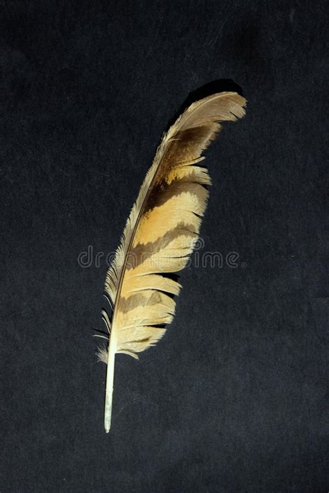 Bird Feather Stock Images Download Royalty Free