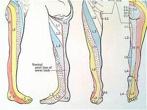 Nerve Pain: Leg Nerve Pain Chart