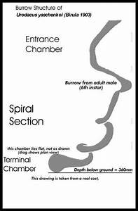 The Spiral Burrow