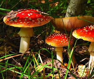 DECOMPOSERS - Big Decomposers, OCEAN CLEANERS, Little ...