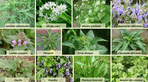 cuisine de plantes sauvages les saisons de la vallée