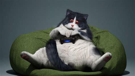 Wallpaper Cat Gamepad Funny Cool Gamer Hd Picture Image
