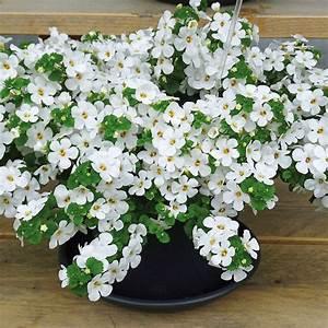 Plantes Et Fleurs Pour Balcon : fleurs grimpantes pour balcon fashion designs ~ Premium-room.com Idées de Décoration