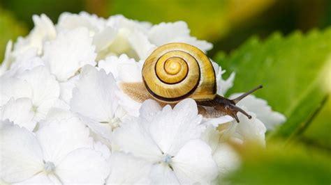 Mittel Gegen Schneckeneier by Schnecken Bek 228 Mpfen So Sch 252 Tzen Sie Ihren Garten Vor