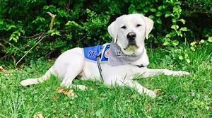 service dogs by warren retrievers delivers diabetic