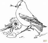 Goldfinch Coloring American Dandelion Pages Seeds Feeds Printable Eastern Bird Template Colouring Supercoloring Goldfinches Drawings Cartoon Birds Crafts 09kb 862px sketch template