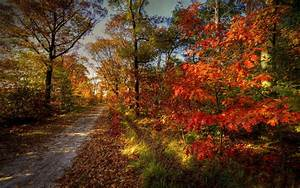Forest, Road, Nature, Sky, Autumn, Trees, Landscape, Wallpapers, Hd, Desktop, And, Mobile, Backgrounds