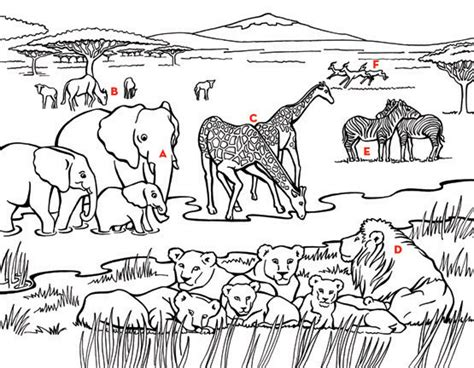 animal habitat coloring pages  getcoloringscom  printable colorings pages  print