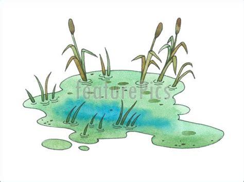 bog  swamp illustration