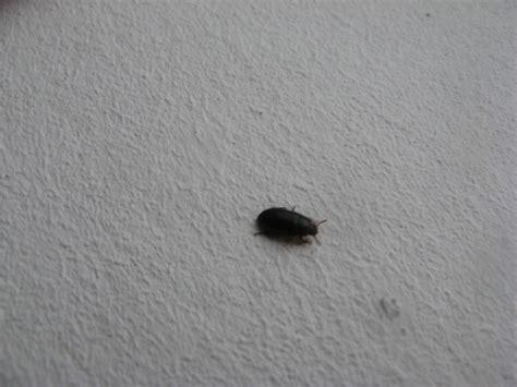 petites b 234 tes noires dans la pi 232 ce de mes ratous