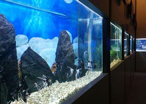 taraporewala aquarium mumbai a whole mumbai gets its aquarium back but don t expect a world class one rediff india news