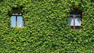Lüften Bei Regen : tipps gegen heuschnupfen so sagen sie den pollen den kampf an ~ Eleganceandgraceweddings.com Haus und Dekorationen