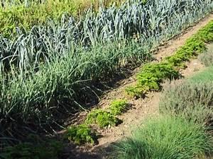 Plantes Amies Et Ennemies Au Potager : le calendrier du potager ~ Melissatoandfro.com Idées de Décoration