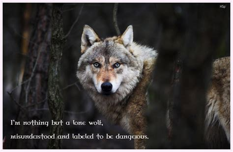 Black Wolf Quotes Wallpaper by 20 Lone Wolf Quote Wallpapers At Wallpaperbro