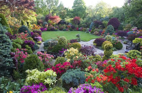 acers and azalea flowers in early evening light thanks