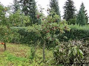 Großen Apfelbaum Kaufen : gartentagebuch september 2012 ~ Lizthompson.info Haus und Dekorationen