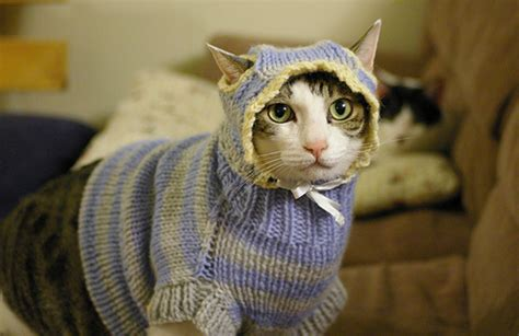 sweater cat home design garden architecture blog magazine