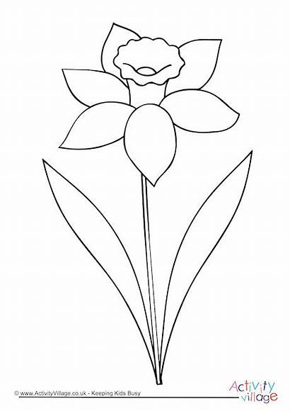 Daffodil Colouring Outline Drawing Pages Spring Flower