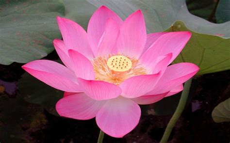 lotus pictures digital hd