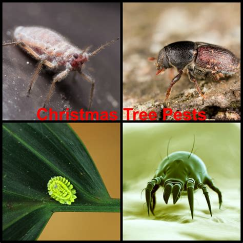 do real christmas trees have bugs pests in real trees debugged