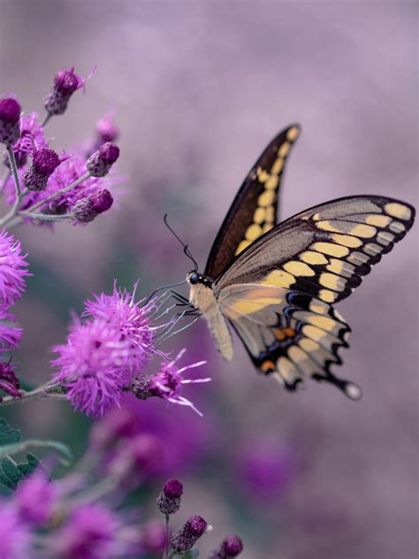 chasing butterflies chasing romance ps  love