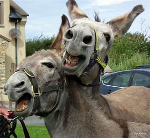 27 Funny Donkey Pictures
