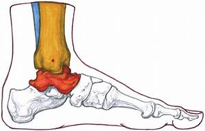 Left Foot  Medial View