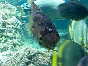 baby fish cute