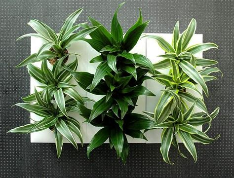 cadre vegetal pas cher atlub