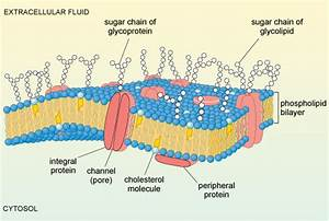 A Tour Of The Cell  4 1 Cell Surfaces - Openlearn