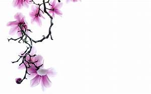 Free Flower Wallpaper White Background Hd Branch Of Pink ...