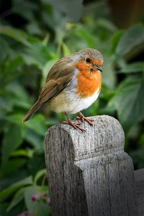 the 25 best ideas about garden birds on pinterest