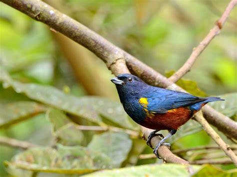 brazilian, Wild, Birds, Brazil Wallpapers HD / Desktop and ...