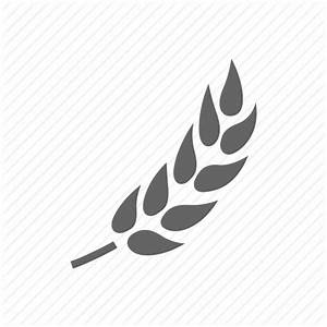 Barley, wheat icon | Icon search engine