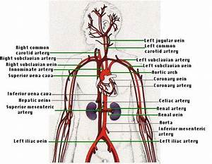 218 Best Images About Vasculartyler On Pinterest