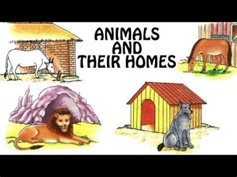 animals   homes animal shelter  kids fun