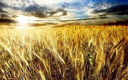 Harvest Desktop Wheat Wallpapers