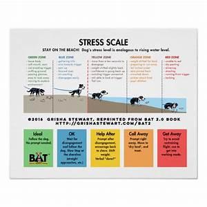 Dog Stress Scale - Avoidance/Fear Beach Analogy Poster ...