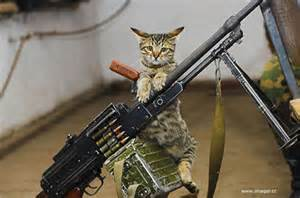 cat gun cats with guns collection world