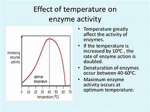 Biochemical Principles Of Enzyme Action