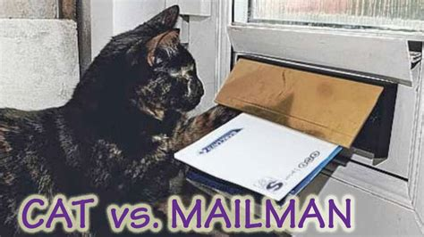 Funny Cats Wait For Mailman! Hilarious! Compilation