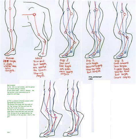 digitigrade leg proportions study foaming tutorial dragon legs 10kk drawing fursuit human anthro anatomy deviantart costume cosplay animal furry draw