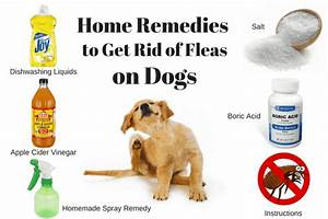 How to get rid of fleas in carpet home remedy floor matttroy for How to kill fleas on wood floors