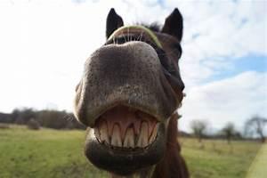Combien De Chevaux : la fr quence des soins au cheval ~ Medecine-chirurgie-esthetiques.com Avis de Voitures