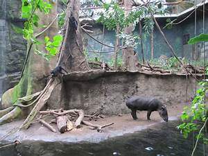 Henry Doorly Zoo 2010 - Bairds Tapir and Geoffreys Spider ...