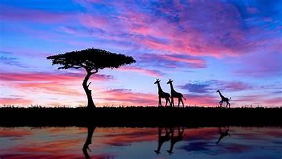 Sunset Africa Giraffe 4k Wallpapers Tree African
