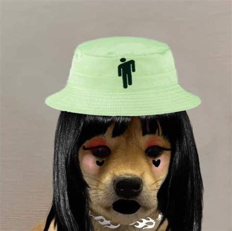 Doge jojo   jojo's bizarre adventure. Pin by kamila on :oo in 2020   Dog images, Cute animals, Dogs